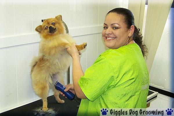 Dog Grooming Parker